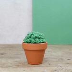 Haakpakket Cactussen Hardicraft